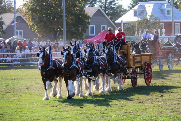 it's all about me; carp fair heavy horse show; draft horses; price clydesdales