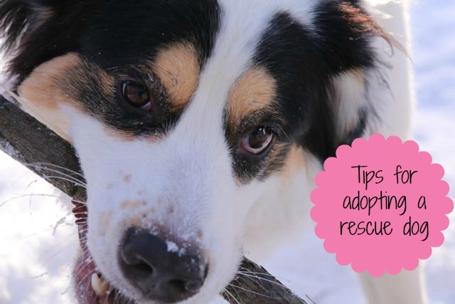 it's all about me; tips for adopting a rescue